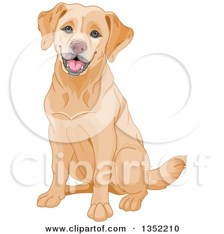 Clipart of a Happy Yellow Labrador Retriever Dog Sitting - Royalty Free Vector Illustration by Pushkin