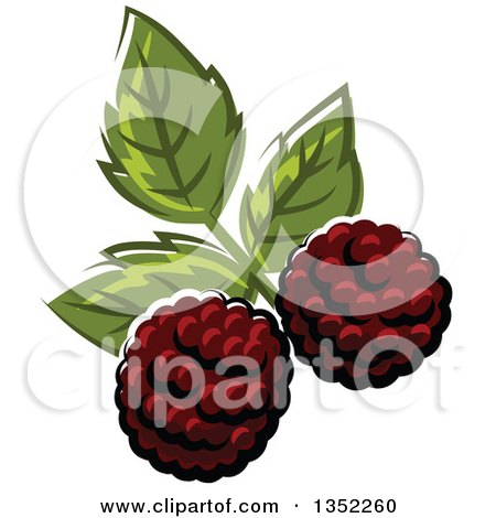 Clipart of Cartoon Blackberries and Leaves - Royalty Free Vector Illustration by Vector Tradition SM