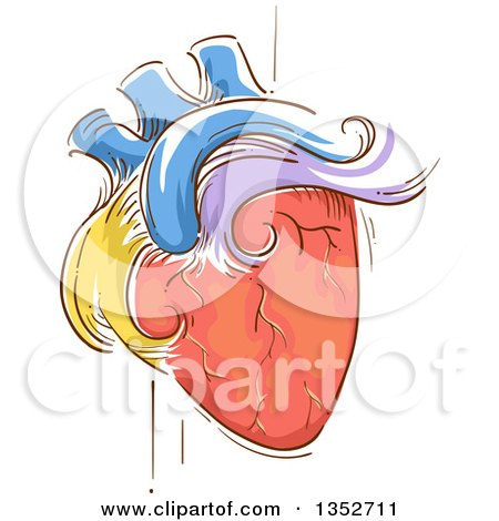 Clipart of a Sketched Colorful Human Heart Pulsating - Royalty Free Vector Illustration by BNP Design Studio