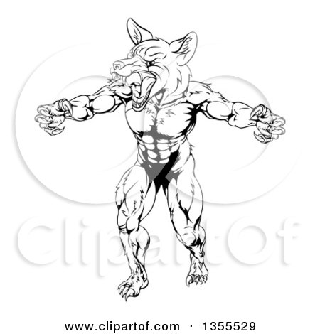 Clipart of a Black and White Muscular Fox Man Mascot Lunching Forward to Attack - Royalty Free Vector Illustration by AtStockIllustration