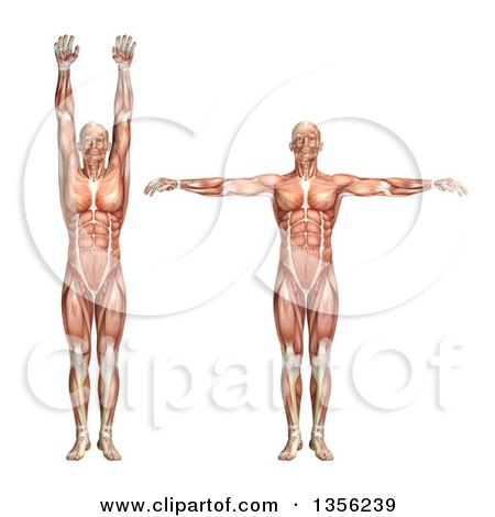Clipart of a 3d Anatomical Man with Visible Muscles, Showing Shoulder Abduction and Adduction, on a White Background - Royalty Free Illustration by KJ Pargeter
