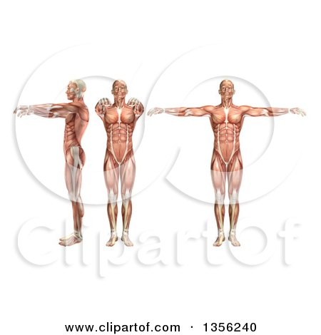 Clipart of a 3d Anatomical Man with Visible Muscles, Showing Shoulder Abduction and Horizontal Abduction, on a White Background - Royalty Free Illustration by KJ Pargeter