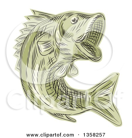 Clipart of a Green Sketched or Engraved Leaping Largemouth Bash Fish - Royalty Free Vector Illustration by patrimonio