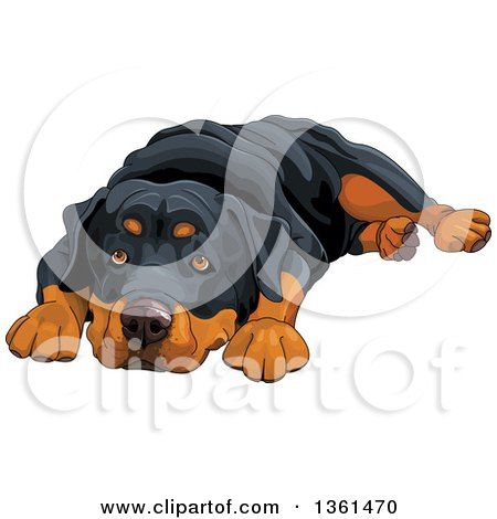 Clipart of a Cute Rottweiler Dog Resting His Head Between His Paws - Royalty Free Vector Illustration by Pushkin