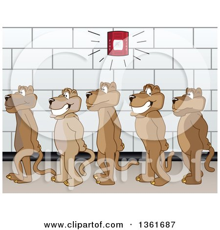 Clipart of Cougar School Mascot Characters in Line During a Fire Drill in a Hallway, Symbolizing Safety - Royalty Free Vector Illustration by Toons4Biz