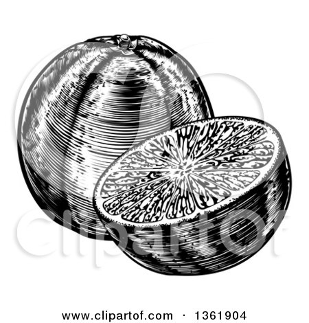 Clipart of Black and White Retro Engraved or Woodcut Whole and Halved Navel Oranges - Royalty Free Vector Illustration by AtStockIllustration