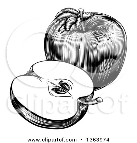 Clipart of a Black and White Engraved Whole and Halved Apple - Royalty Free Vector Illustration by AtStockIllustration