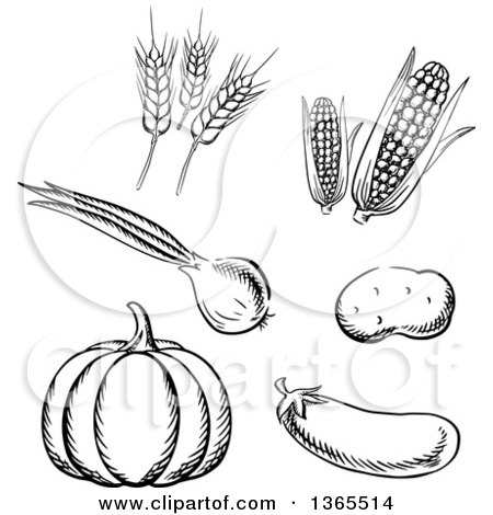 Clipart of Black and White Sketched Vegetables and Wheat - Royalty Free Vector Illustration by Vector Tradition SM