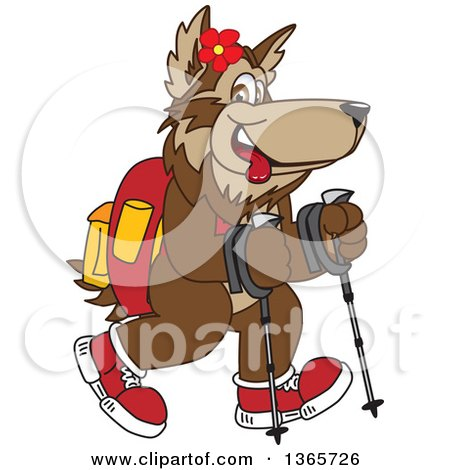 Clipart of a Wolf School Mascot Using Sticks and Hiking - Royalty Free Vector Illustration by Toons4Biz