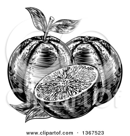Clipart of Black and White Woodcut or Engraved Navel Oranges - Royalty Free Vector Illustration by AtStockIllustration