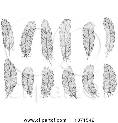 Clipart of Grayscale Feathers - Royalty Free Vector Illustration by Vector Tradition SM