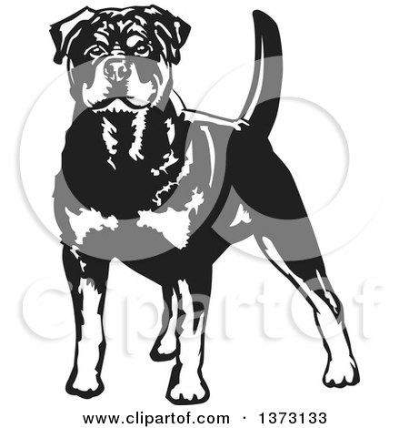 Clipart Of A Black And White Standing Alert Rottweiler Dog