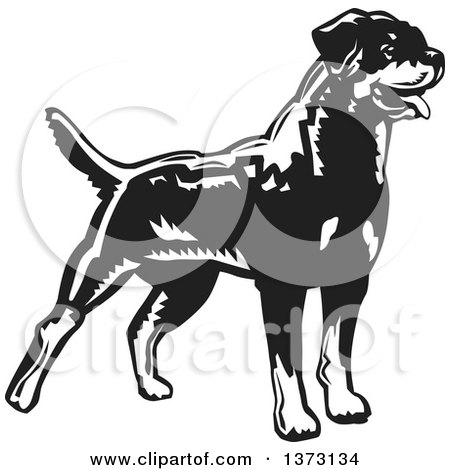 Clipart of a Woodcut Standing Alert Rottweiler Dog in Black and White - Royalty Free Vector Illustration by David Rey