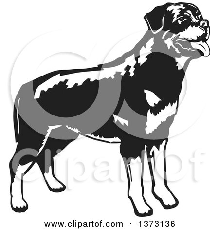 Clipart of a Black and White Standing Rottweiler Dog - Royalty Free Vector Illustration by David Rey
