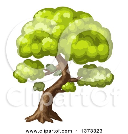 Clipart of a Mature Tree - Royalty Free Vector Illustration by merlinul