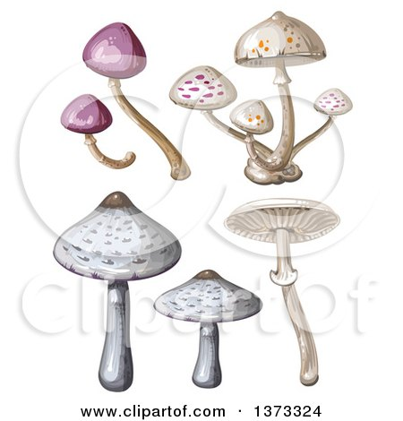 Clipart of Different Mushrooms - Royalty Free Vector Illustration by merlinul