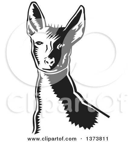 Clipart of a Black and White Woodcut Xolo Mexican Hairless Dog from the Shoulders up - Royalty Free Vector Illustration by David Rey