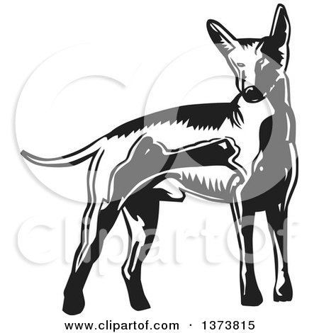 Clipart of a Black and White Woodcut Xolo Mexican Hairless Dog - Royalty Free Vector Illustration by David Rey