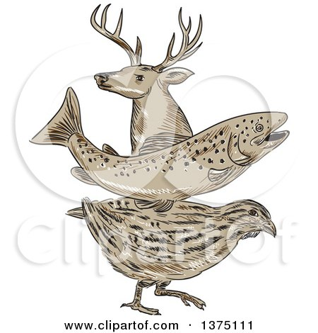 Clipart of a Retro Sketch of a Deer Buck, Trout Fish and Quail - Royalty Free Vector Illustration by patrimonio