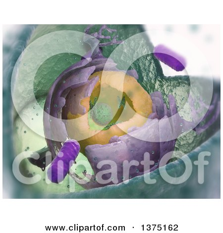 Clipart of a 3d Scientifically Accurate Eukaryotic Cell Structure Cut Away - Royalty Free Illustration by Mopic