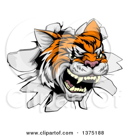 Clipart of a Ferocious Tiger Mascot Head Breaking Through a Wall - Royalty Free Vector Illustration by AtStockIllustration