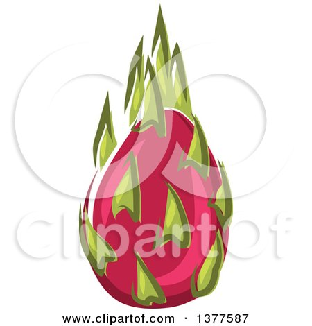 Clipart of a Pitaya Dragon Fruit - Royalty Free Vector Illustration by Vector Tradition SM