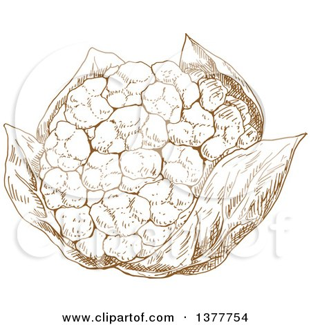 Clipart of a Brown Sketched Cauliflower - Royalty Free Vector Illustration by Vector Tradition SM