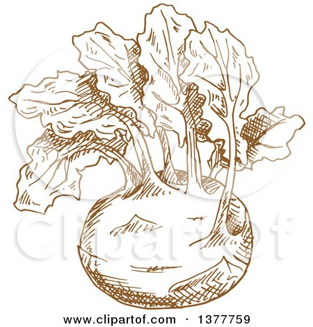 Clipart of a Brown Sketched Kohlrabi - Royalty Free Vector Illustration by Vector Tradition SM