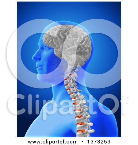 Clipart of a 3d Anatomical Man with Visible Brain and Spine, over Blue - Royalty Free Illustration by KJ Pargeter