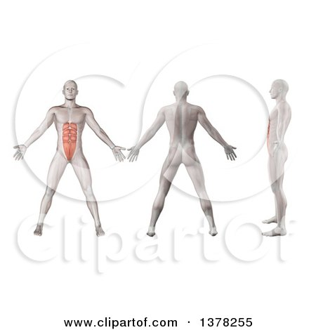 Clipart of a 3d Anatomical Men Shown with Visible Rectus Abdominis Muscles, Back Side and in Profile, on a White Background - Royalty Free Illustration by KJ Pargeter