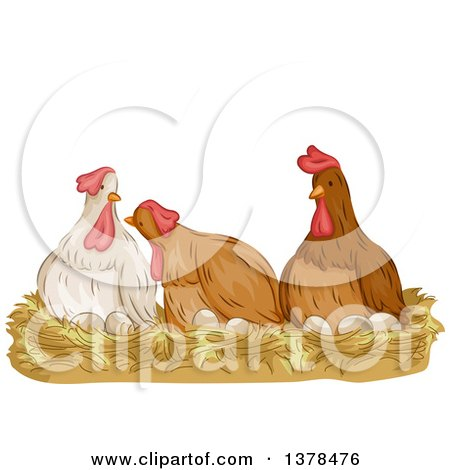 Clipart of a Group of Hens Laying Eggs - Royalty Free Vector Illustration by BNP Design Studio
