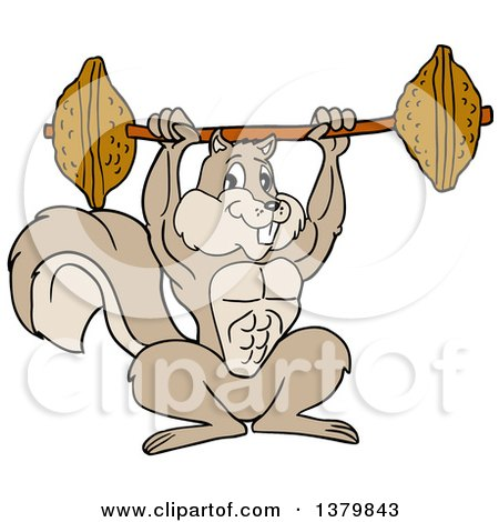 Clipart Of A Cartoon Muscular Bodybuilder Squirrel Lifting a Barbell with Nuts - Royalty Free Vector Illustration by LaffToon