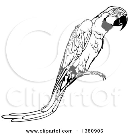 Clipart of a Black and White Perched Macaw Parrot - Royalty Free Vector Illustration by dero