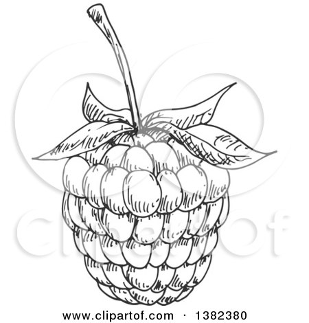 Clipart of Sketched Blackberries and Leaves - Royalty Free ...