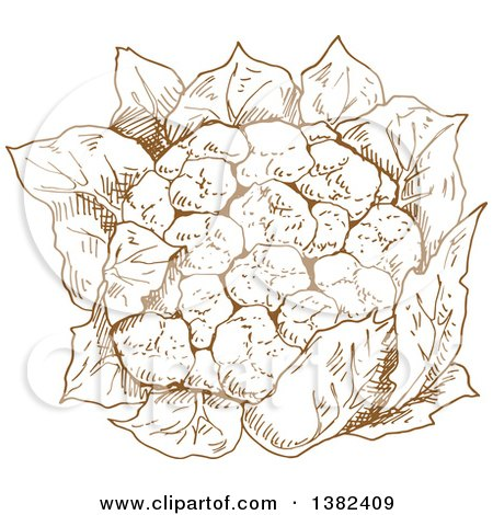 Clipart of a Brown Sketched Head of Cauliflower - Royalty Free Vector Illustration by Vector Tradition SM