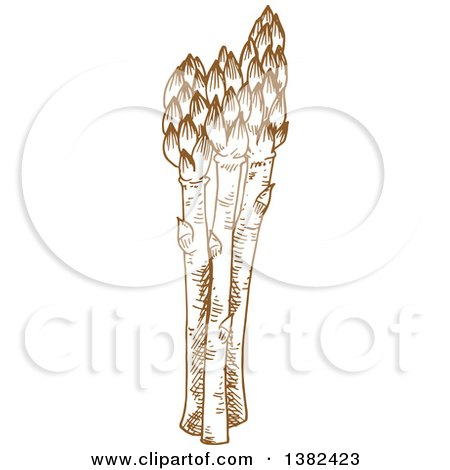 Clipart of Brown Sketched Asparagus - Royalty Free Vector Illustration by Vector Tradition SM