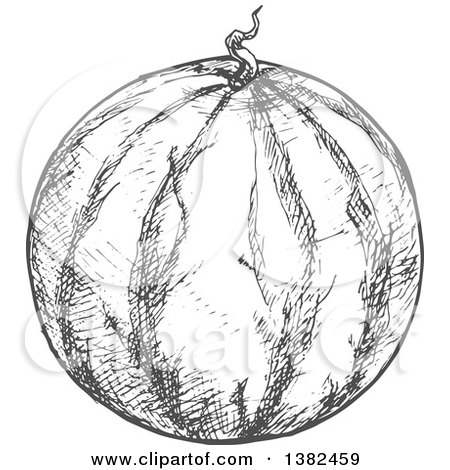 Clipart of a Gray Sketched Watermelon - Royalty Free Vector Illustration by Vector Tradition SM