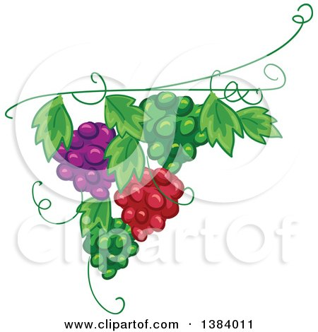 Clipart of a Green, Red and Purple Grape Vine Design Element - Royalty Free Vector Illustration by BNP Design Studio
