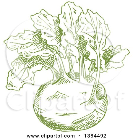 Clipart of a Sketched Green Kohlrabi - Royalty Free Vector Illustration by Vector Tradition SM