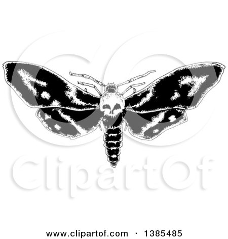 Clipart of a Black and White Moth with a Skull Head - Royalty Free Vector Illustration by lineartestpilot