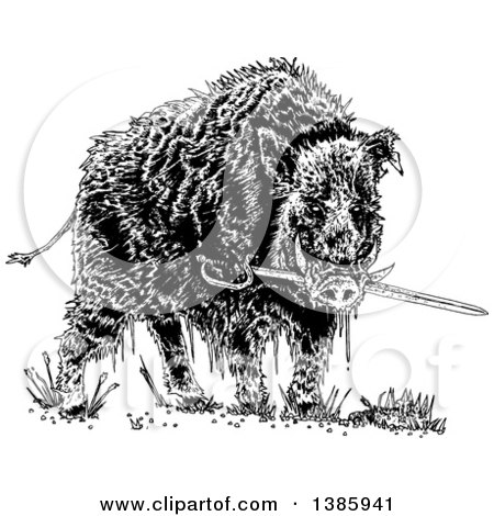 Clipart of a Black and White Wild Boar Pig Biting a Sword - Royalty Free Vector Illustration by lineartestpilot