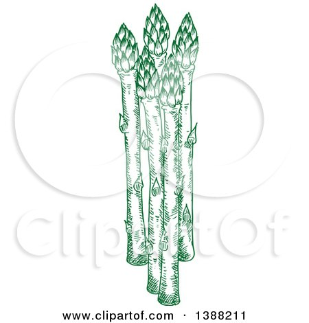 Clipart of Sketched Green Asparagus Stalks - Royalty Free Vector Illustration by Vector Tradition SM