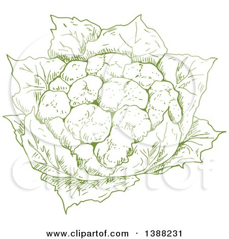 Clipart of a Sketched Green Head of Cauliflower - Royalty Free Vector Illustration by Vector Tradition SM