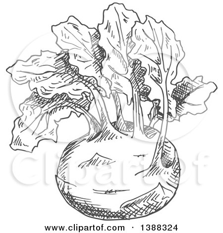Clipart of a Sketched Gray Kohlrabi - Royalty Free Vector Illustration by Vector Tradition SM