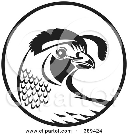 Clipart Of A Retro Black And White Quail Bird And Grass In A Purple
