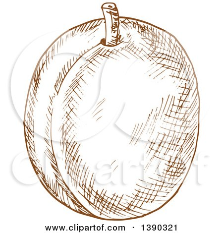 Clipart of a Brown Sketched Plum, Peach or Apricot - Royalty Free Vector Illustration by Vector Tradition SM