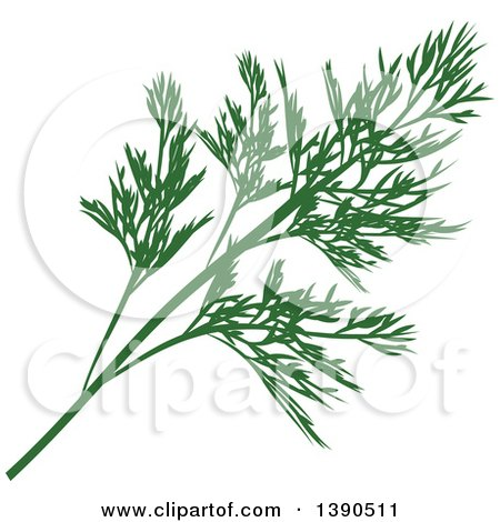 Clipart of a Culinary Spice Herb, Dill - Royalty Free Vector Illustration by Vector Tradition SM