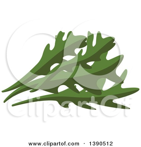 Clipart of a Culinary Herb, Arugula - Royalty Free Vector Illustration by Vector Tradition SM
