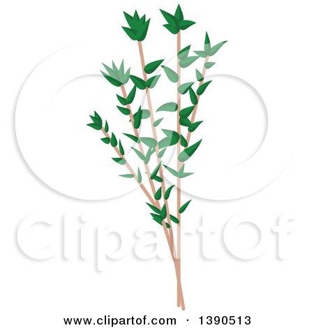 Clipart of a Culinary Spice Herb, Thyme - Royalty Free Vector Illustration by Vector Tradition SM