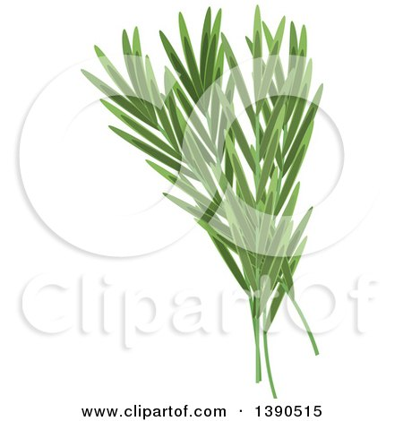 Clipart of a Culinary Spice Herb, Tarragon - Royalty Free Vector Illustration by Vector Tradition SM